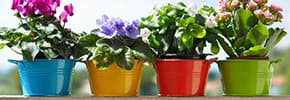 Горшки, кашпо для цветов и растений