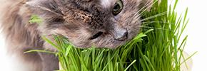 Витамины и пищевые добавки для кошек